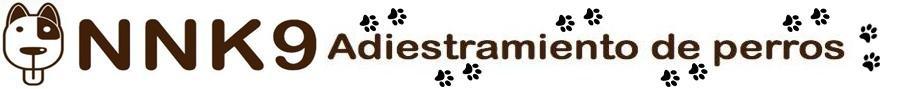 curso adiestramiento de perros