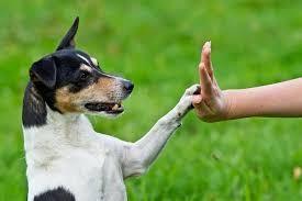curso de adiestramiento de perros - perro